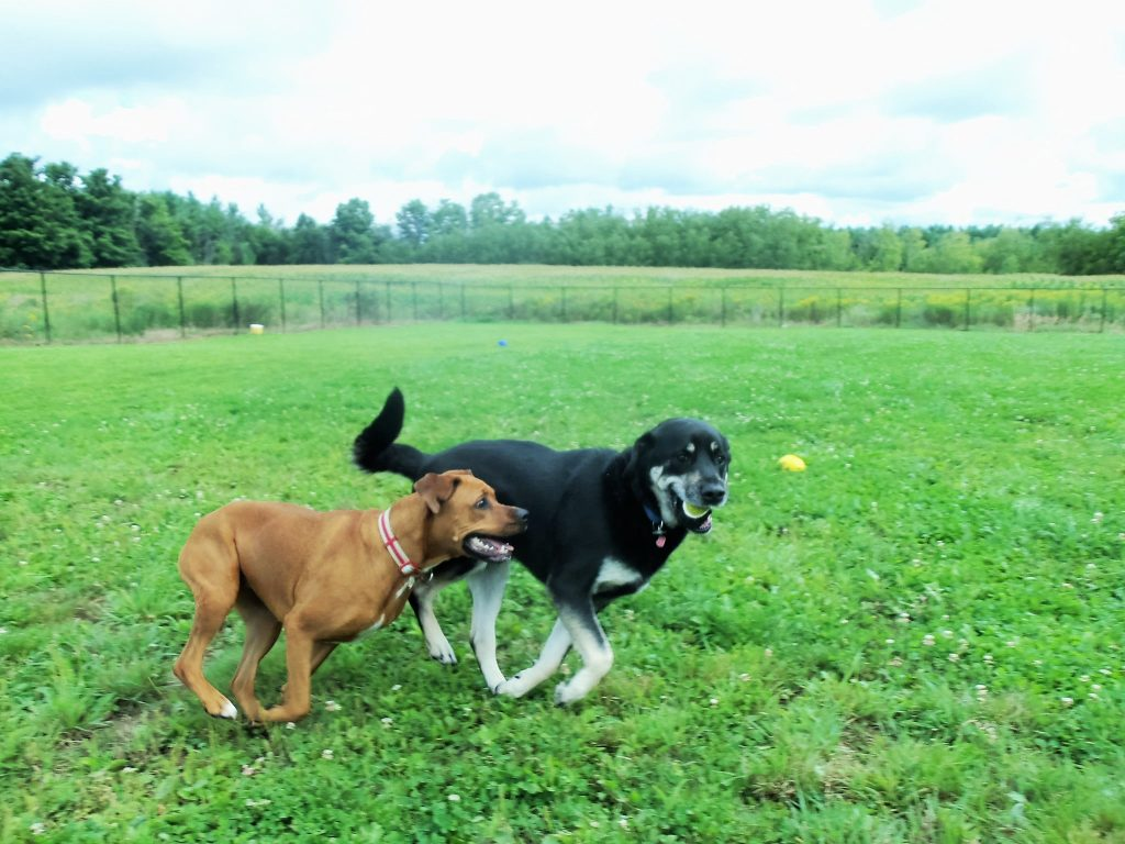 Two happy dogs at dog kennels in Guelph