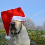 labrador retriever santa christmas