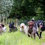 What to look for in a dog daycare from Sunset Dog Retreat