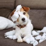 Decoding Your Dog's Bad Behaviour