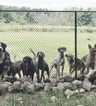 What to Expect at Doggy Daycare