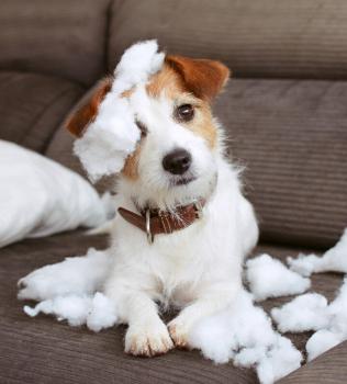 Decoding Your Dog's Bad Behaviour