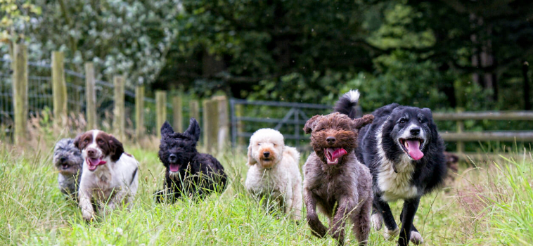 What To Look For In A Dog Daycare