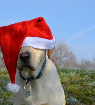 5 Reasons To Board Your Dog During The Holidays
